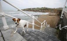 ¿Tienes perro? Estas son las playas asturianas a las que lo puedes llevar