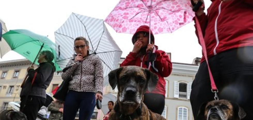 Nueve concejos crearán hoy el consorcio para construir una perrera mancomunada