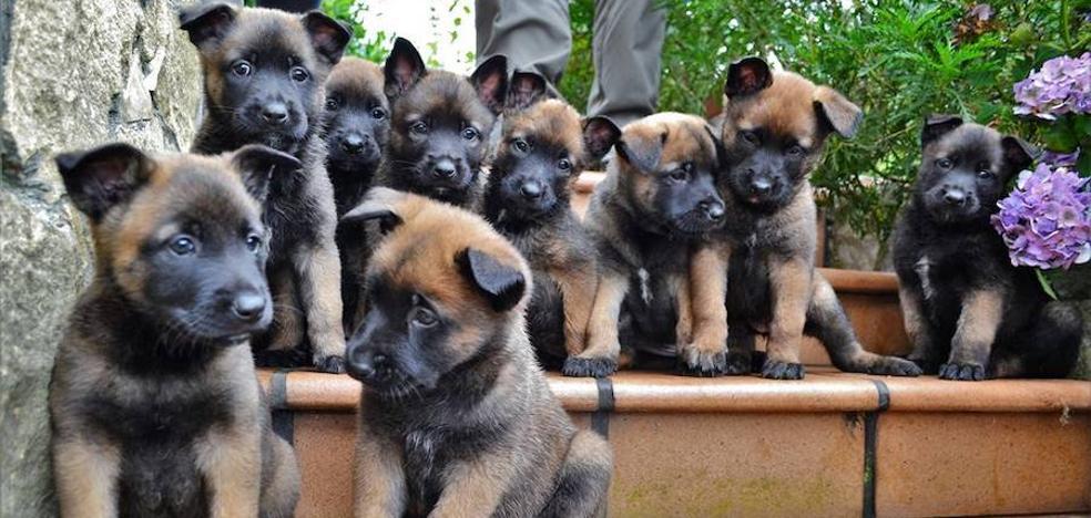 La Unidad Canina de Rescate busca adiestradores para los cachorros de su perra 'Moon'