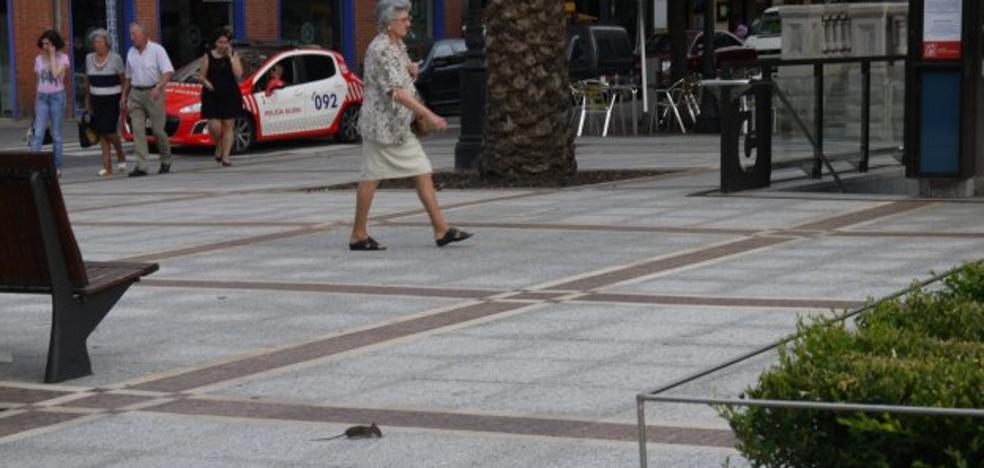 Fauna indeseada en el casco urbano