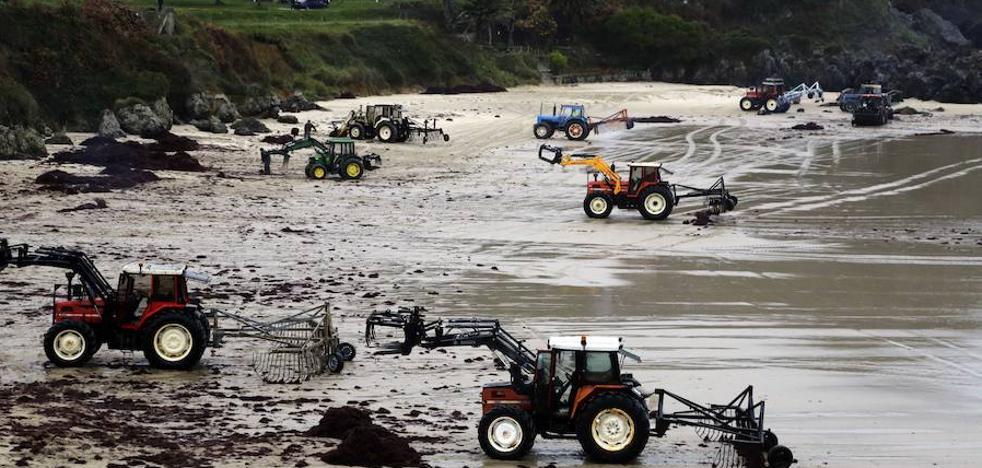 «Pagamos justos por pecadores», lamentan los recolectores de algas