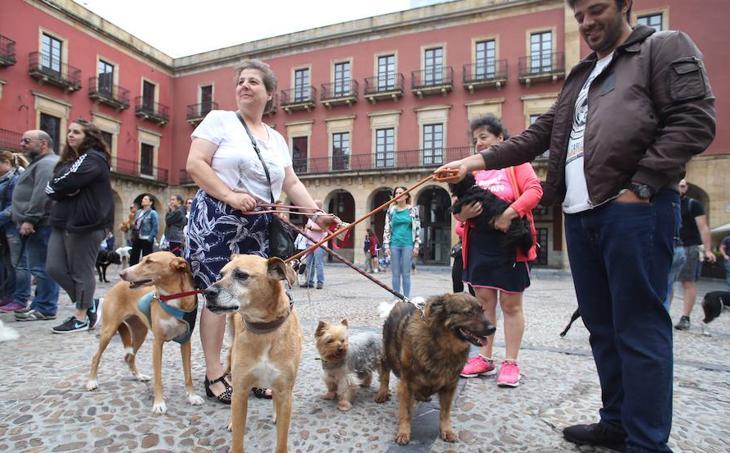 Los dueños de mascotas de Gijón, unidos contra su envenenamiento