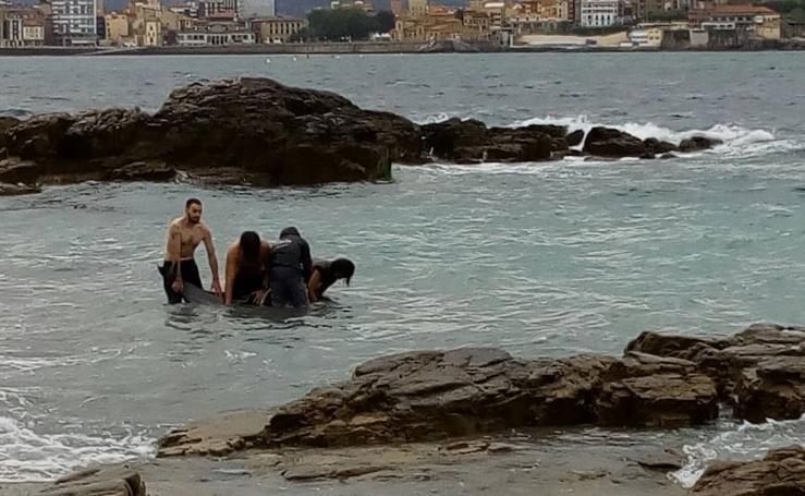 Aparece varado un delfín en la playa San Lorenzo de Gijón