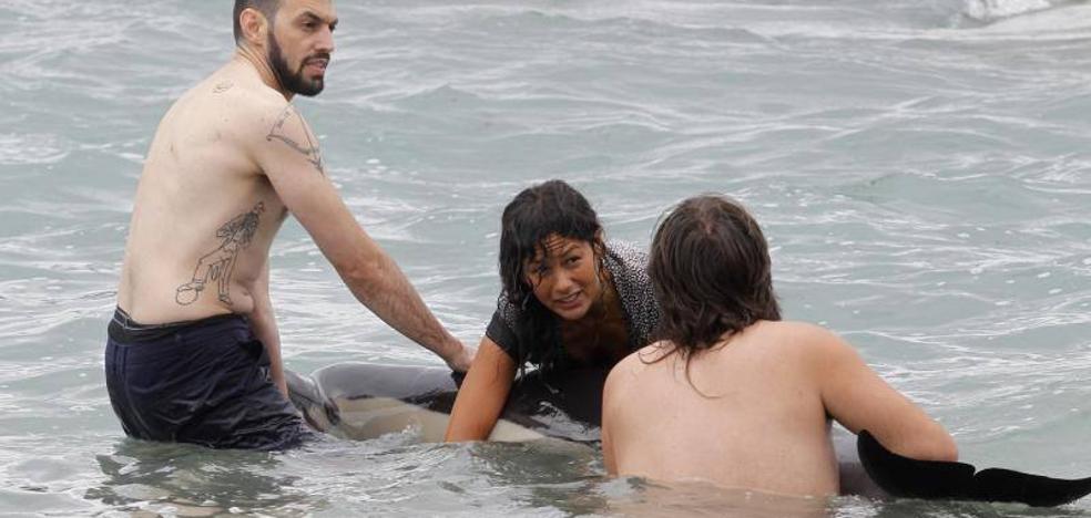 Emoción en la playa ante el intento de rescate de un delfín