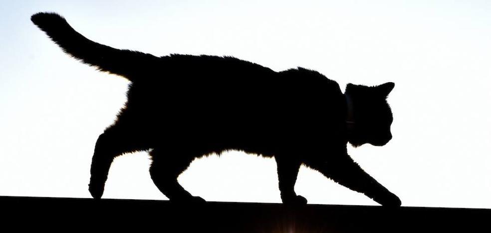 Un gato muerde a una mujer y le contagia un virus mortal