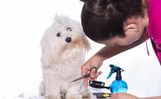 ¿Le cortas el pelo a tu perro en verano? Puedes estar haciéndolo mal