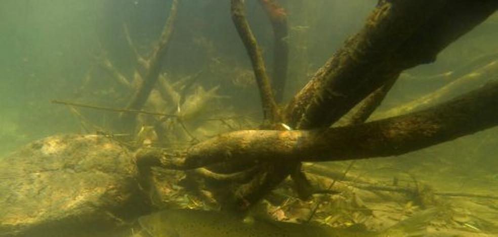 Los ecologistas piden ampliar la lista de especies amenazadas