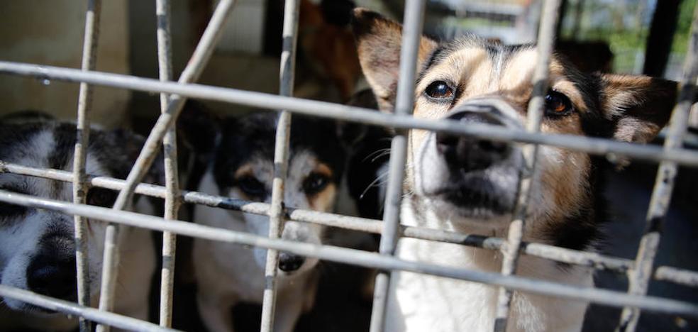 El PSOE renuncia a construir la perrera de Avilés en La Lloba