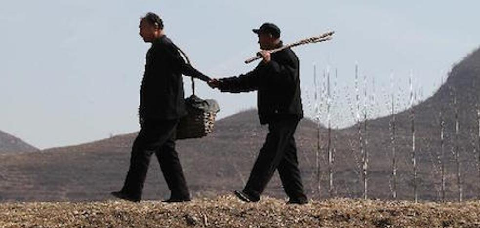 Los discapacitados que crearon un bosque de 10.000 árboles