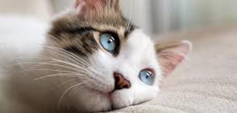 ¿Por qué Twitter se llenó de gatitos tras el atentado?