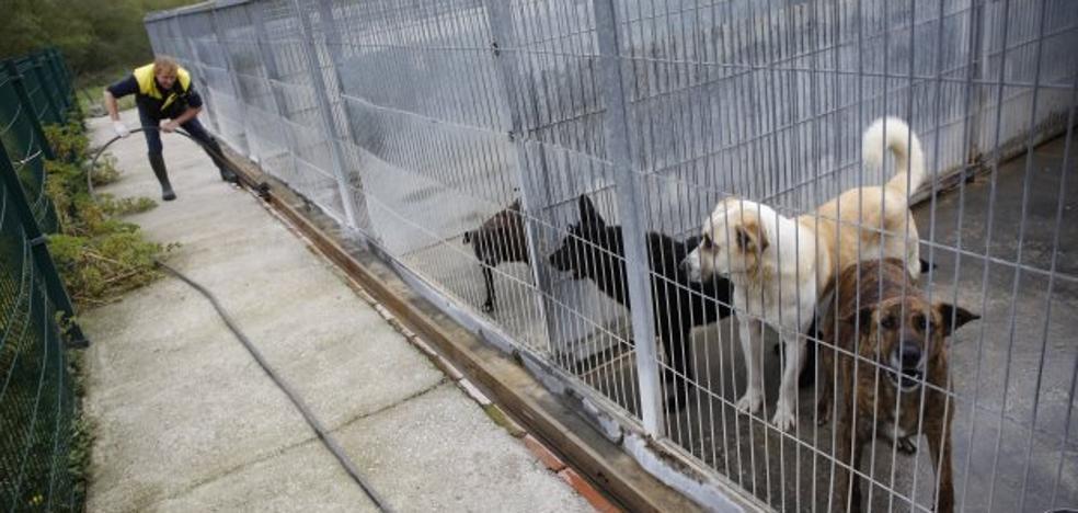 Voluntarios de la perrera de Langreo alertan de que las mascotas llevan dos meses sin pasear