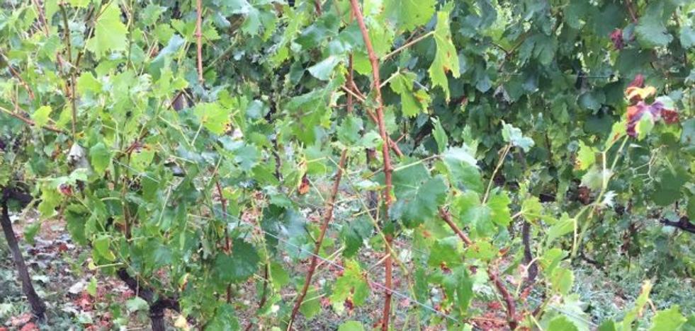 Uva y manzana, los cultivos más dañados por el granizo mientras «la tierra sigue seca»