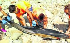 Aparecen tres delfines muertos en la costa asturiana en el mismo día