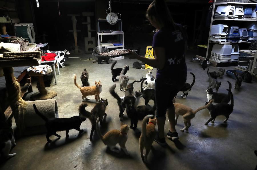 ¿Te imaginas una vida con mil gatos? Así es la mujer que lo hace