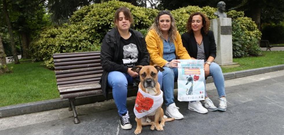 Espertar Animal organizará dos desfiles de adopción canina