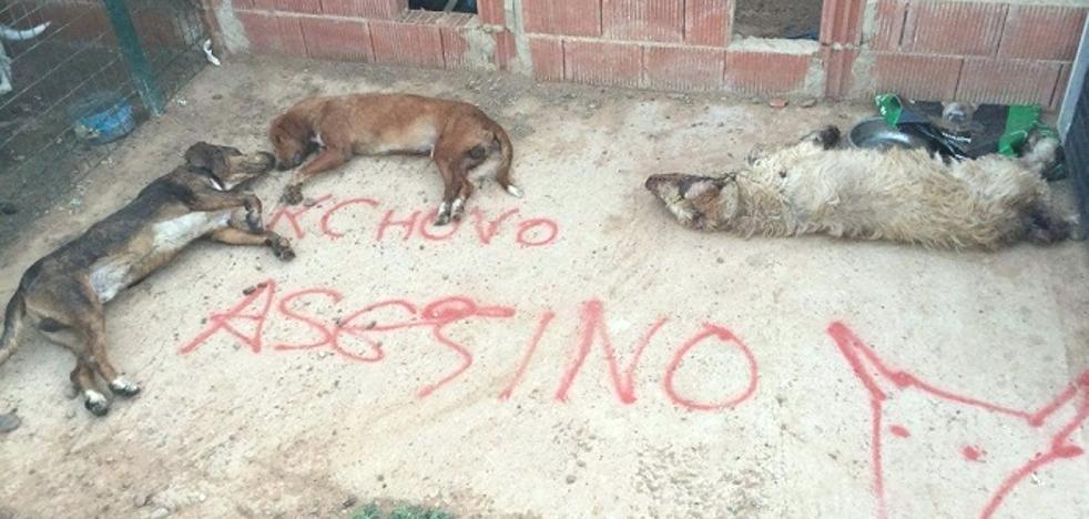 Envenenan a cinco perros del último lanceador del Toro de la Vega