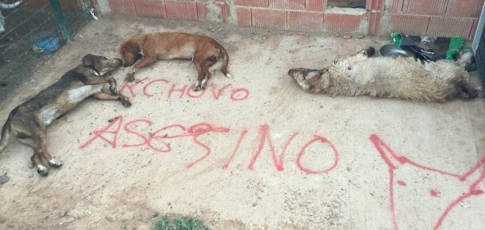 Matan en León a tres perros del último lancero del Toro de la Vega
