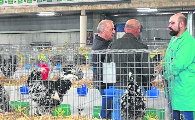 El recinto ferial mierense reúne 700 aves en la primera muestra avícola del Caudal