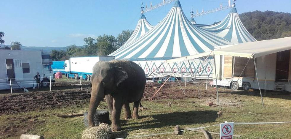 Somos pide explicaciones al PSOE por la instalación de un circo con animales en Villaviciosa