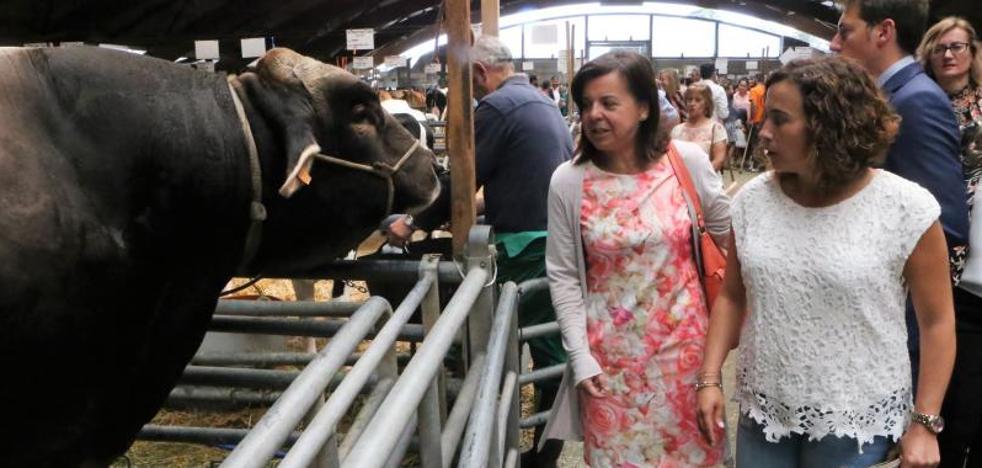 Ganaderos de leche recibirán las ayudas del Estado a partir de la próxima semana