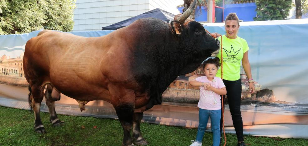 'Gandul', 1.300 kilos de nobleza