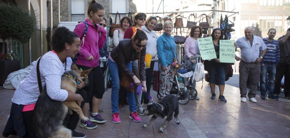 Una veintena de vecinos reclama 'muertes cero' en la perrera langreana