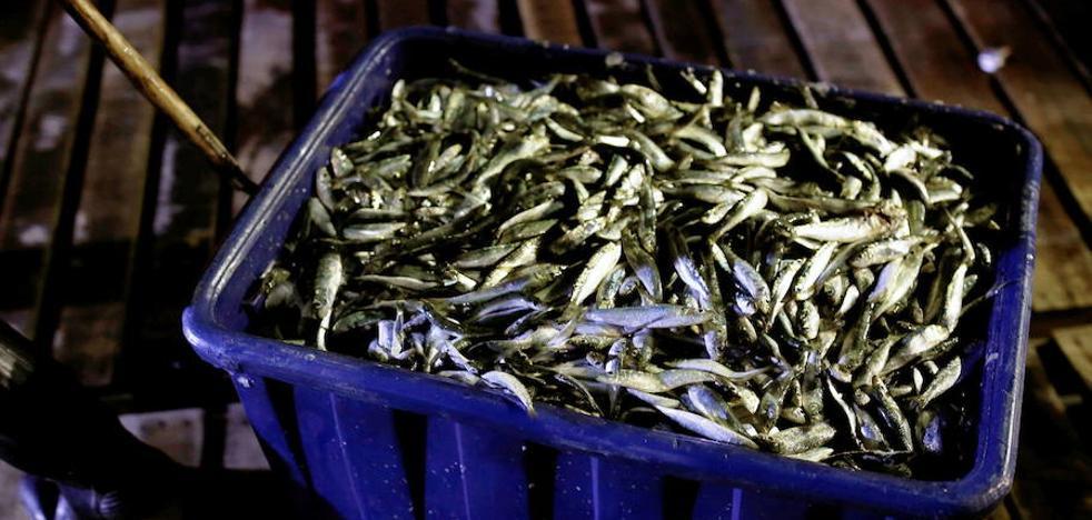 El Ministerio limita la pesca de sardina a partir de enero la captura de sardina