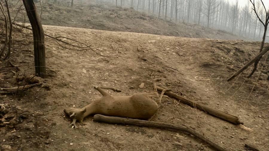 La desoladora imagen que deja el fuego en Asturias