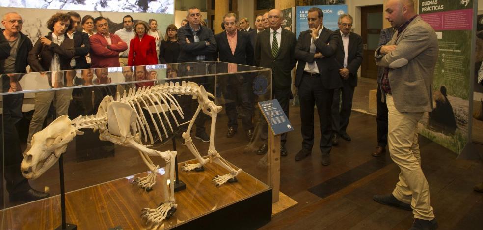 La exposición 'Osos' se abre hoy al público en el RIDEA