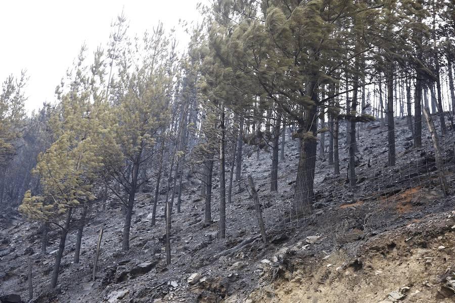 Desolación tras el paso del fuego