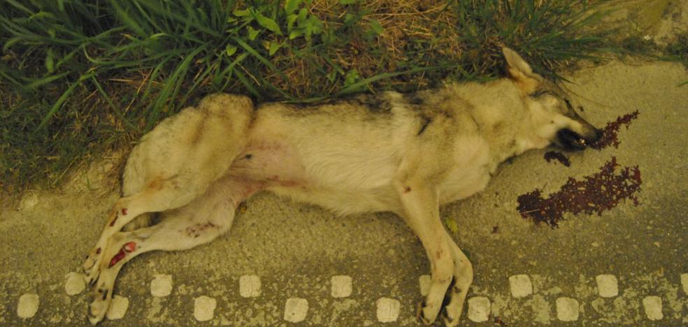 Los lobos muertos no vuelan