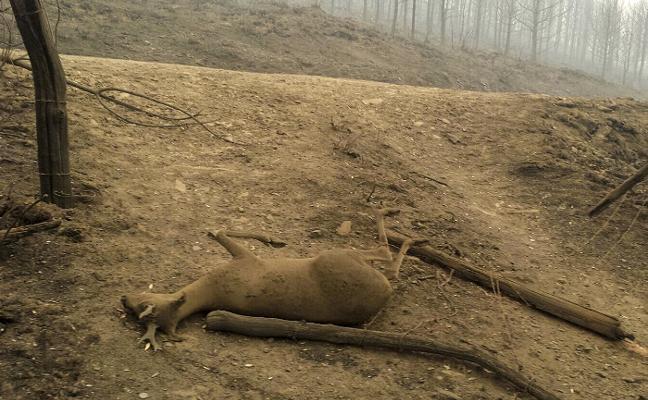 El calor y la falta de lluvia reactivan varios focos en Cangas del Narcea