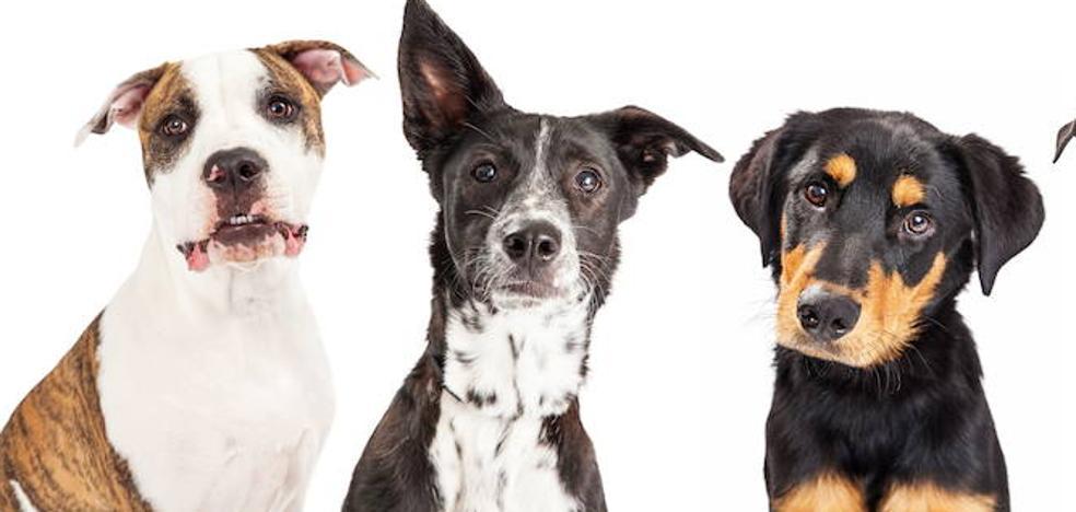 Los perros huelen el miedo: ¿mito o realidad?
