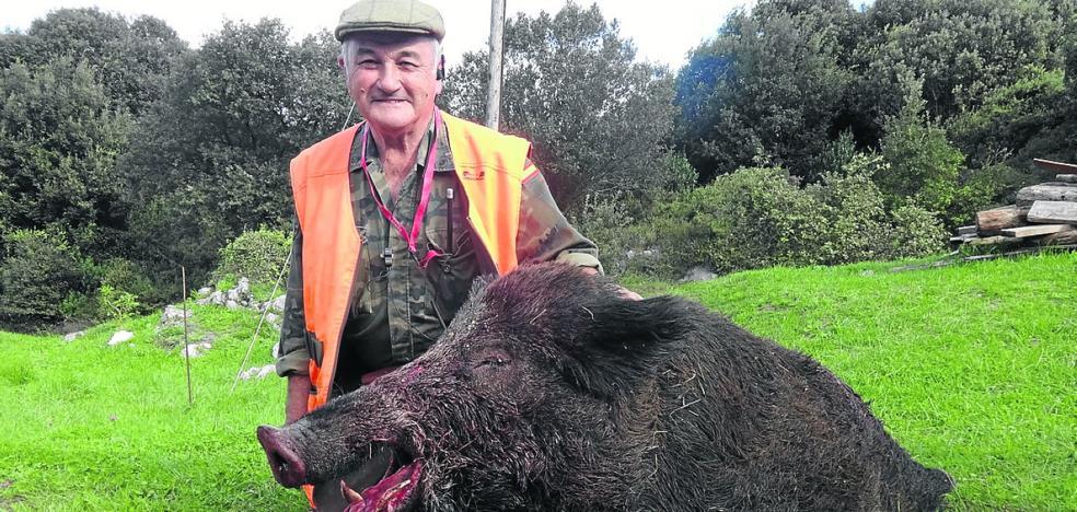 Abaten en Ribadedeva a un jabalí de 185 kilos