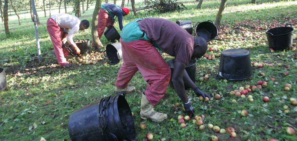 Temporeros de la manzana a 1.200 euros al mes