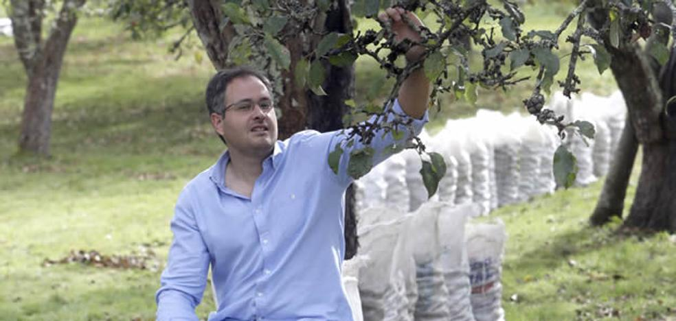 La supercosecha que 'alarma' a los productores de manzana