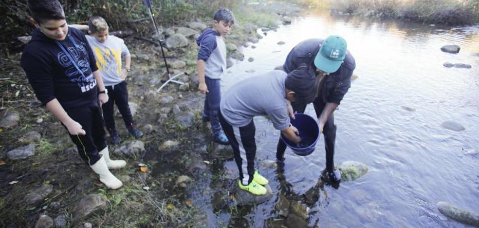 5.000 alevines más de trucha para el río Nalón