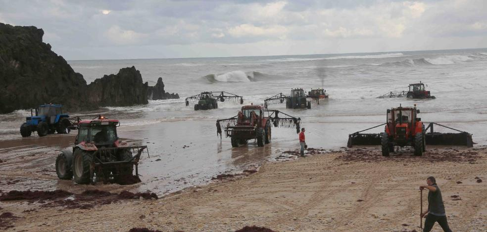 Pesca incrementa hasta los 400 euros las sanciones a los ocleros ilegales