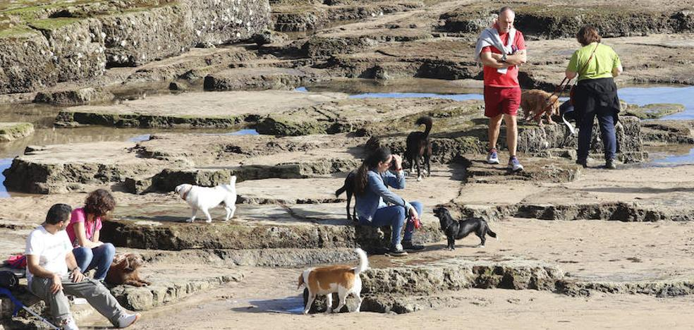 Gijón, mejor destino nacional 'Dog-Friendly 2017'
