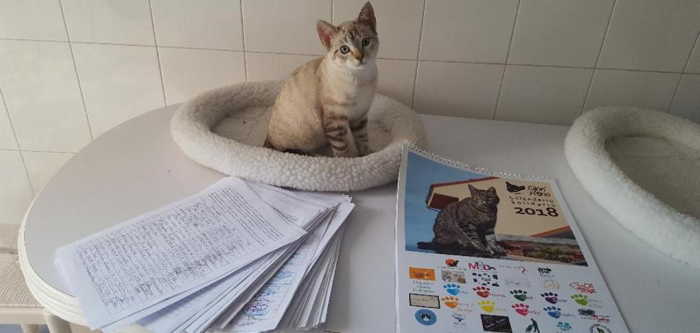 2.000 firmas para pedir el control de los gatos
