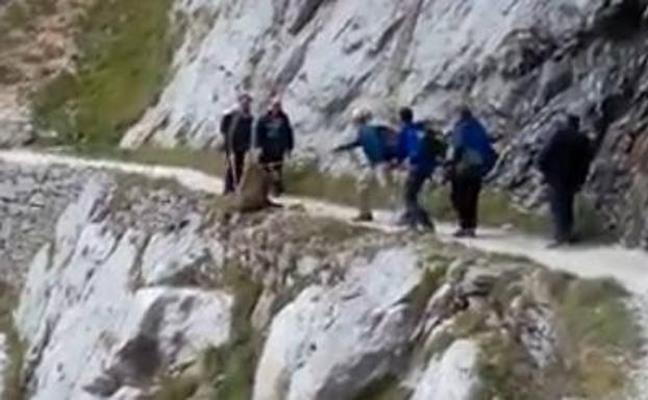 El Seprona busca a los excursionistas que despeñaron a un jabalí en la Ruta del Cares