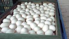 La Asociación del Huevo en Italia alerta de la falta de huevos en el país