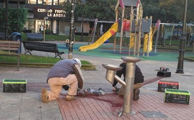 Operarios capturan decenas de palomas en los parques para la campaña de control municipal