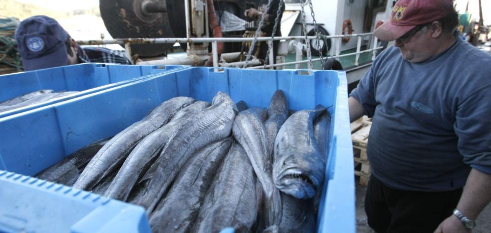 Malestar en el sector ante la reasignación de cuota de merluza