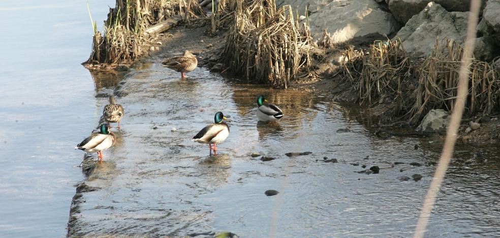 Las aves migratorias comienzan a llegar para la temporada otoñal