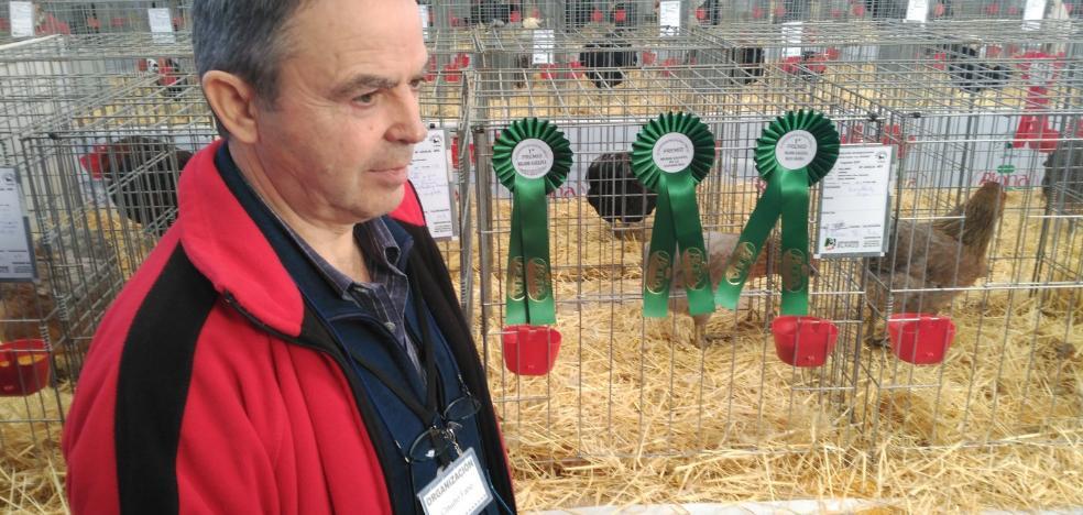 2.400 animales abarrotan el certamen avícola de Vegadeo