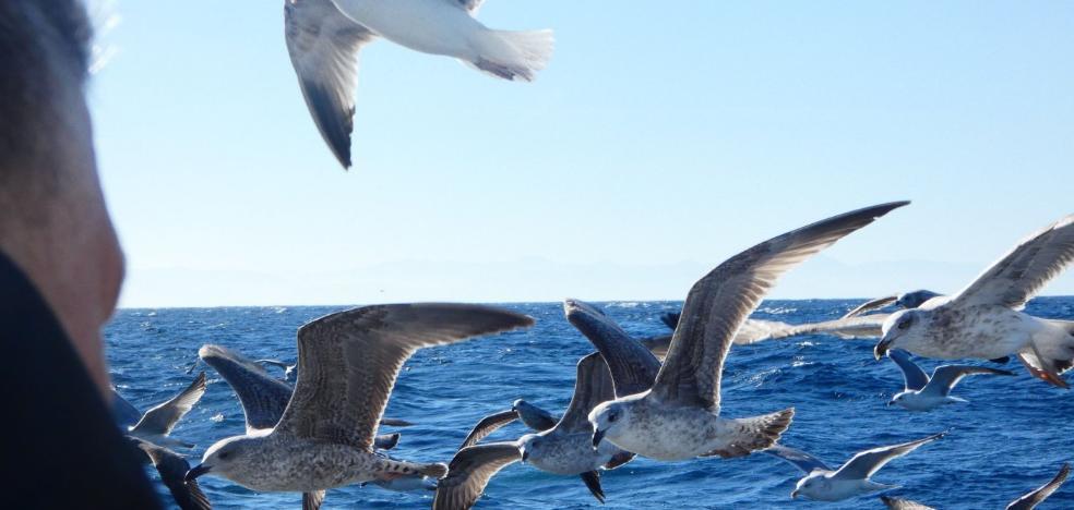 Encuentro con las aves en el Cañón de Avilés