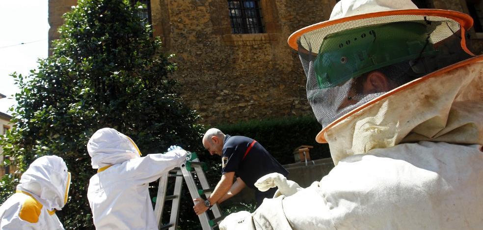 Los bomberos cobrarán 100 euros por retirar nidos de abejas