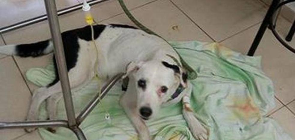 Una perra muere de pena esperando a sus dueños durante un mes en un aeropuerto