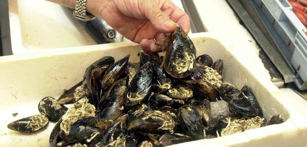 Una empresa proyecta cultivar moluscos en 2.400 metros de El Musel